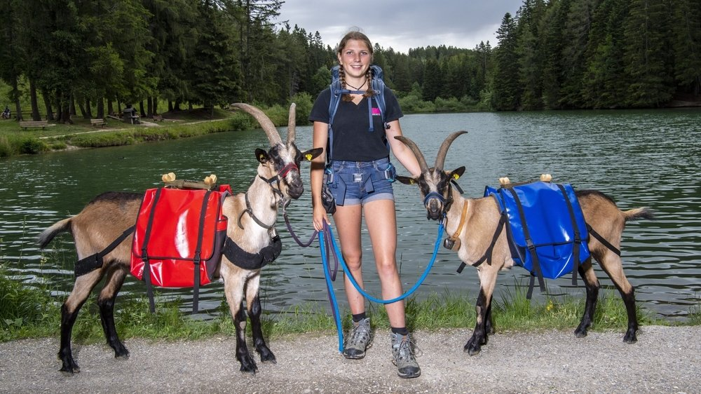 Pour être au top le 2 août, Isaline et ses deux chèvres avalent presque tous les jours plusieurs kilomètres de marche.