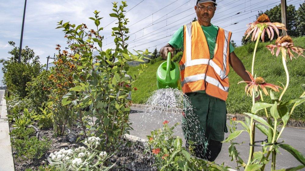 Les fortes pluies ont provoqué des dégâts dans les bacs ornés de plantes vivaces et situés sur la rue de la Blancherie. L'équipe de Jérôme Magnin leur donne une seconde vie.
