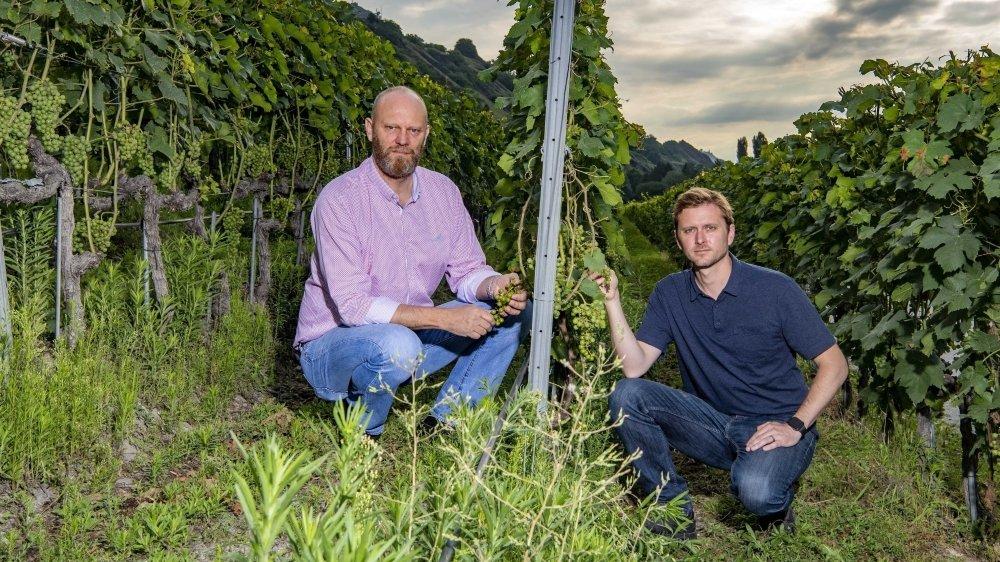 Le chef de l'Office de la viticulture Pierre-André Roduit et le nouveau responsable secteur technique de production Bertrand Nominé jaugent les dégâts causés par le mildiou dans une vigne de Châteauneuf.