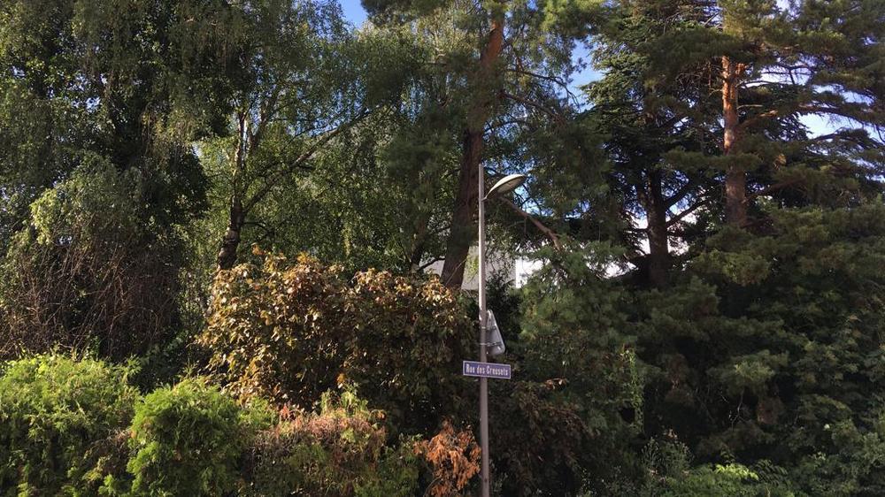 Les arbres de la rue des Creusets ne devraient pas être abattus dans l'immédiat.