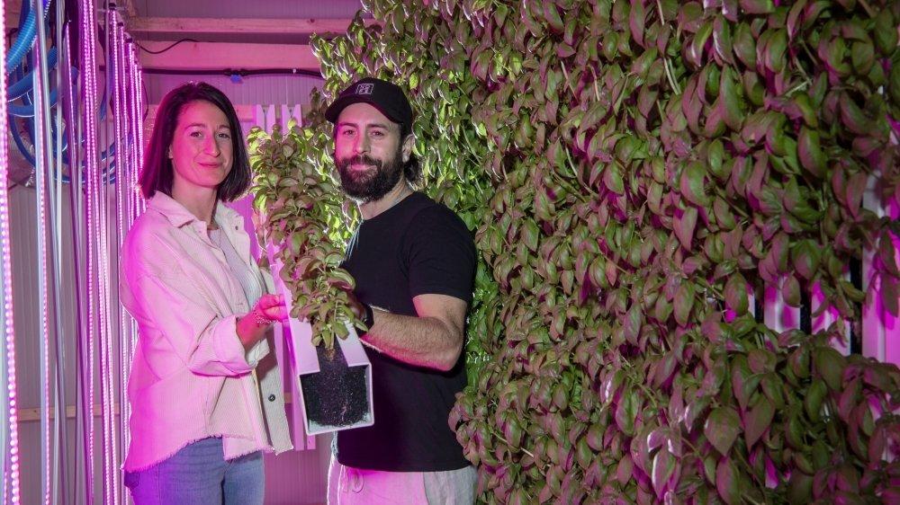 Dans leur ferme verticale utilisant des technologies d'aujourd'hui, Johnny Duarte et Camille Grange produisent notamment du basilic frais hors-sol.