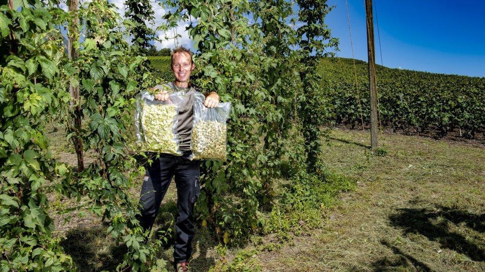 Comme les plantes ne sont pas encore à maturité sur sa parcelle au cœur du vignoble saviésan, Gaël Roten a apporté deux sacs issus de sa première récolte de houblon.
