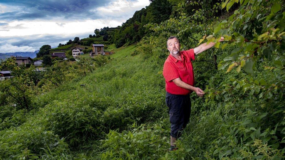 Les abricots ont été volés à Coor, au-dessus d'Aproz, sur le territoire communal de Nendaz.