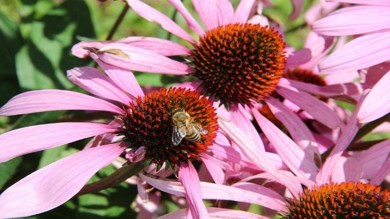Découverte des ruches