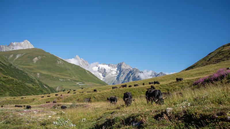 L'alpage de la Plan-La-Chaux est désormais électrifié. Enfin. LDD
