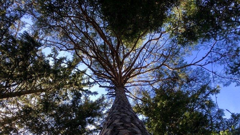 Le murmure de la forêt - visite guidée thématique