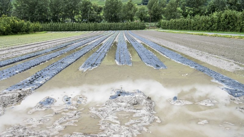 Pluies diluviennes: nouveau gros coup dur pour l'agriculture valaisanne