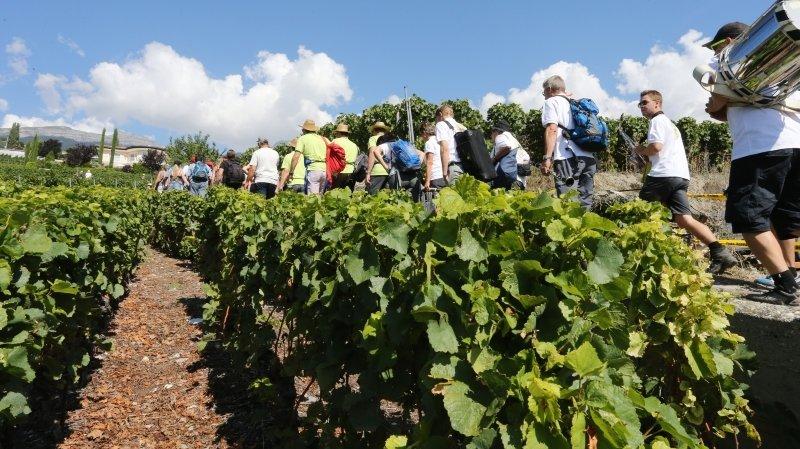 Le peloton des participants de la Marche des cépages devra attendre 2022 pour repartir à la découverte des vignerons-encaveurs disséminés entre Sierre et Salquenen.