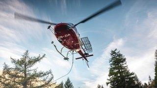 Air Zermatt héliporte des vaches accidentées