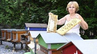 Intempéries estivales: les apiculteurs valaisans prévoient une mauvaise récolte de miel