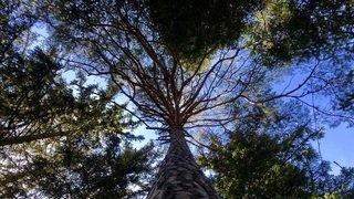 Le murmure de la forêt - visite guidée théamtique