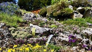 Le Jardin Flore-Alpe, terre d'inspiration