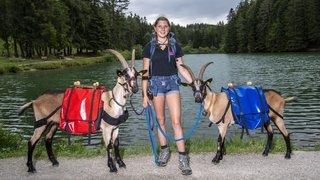 Chermignon: avec ses deux chèvres, elle va relier le Simplon et le Grand-Saint-Bernard à la marche