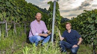 Le mildiou, dernier tourment des vignerons valaisans