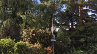 Sion: sans faire le grand saut, la ville fait un petit pas vers la protection de ses arbres