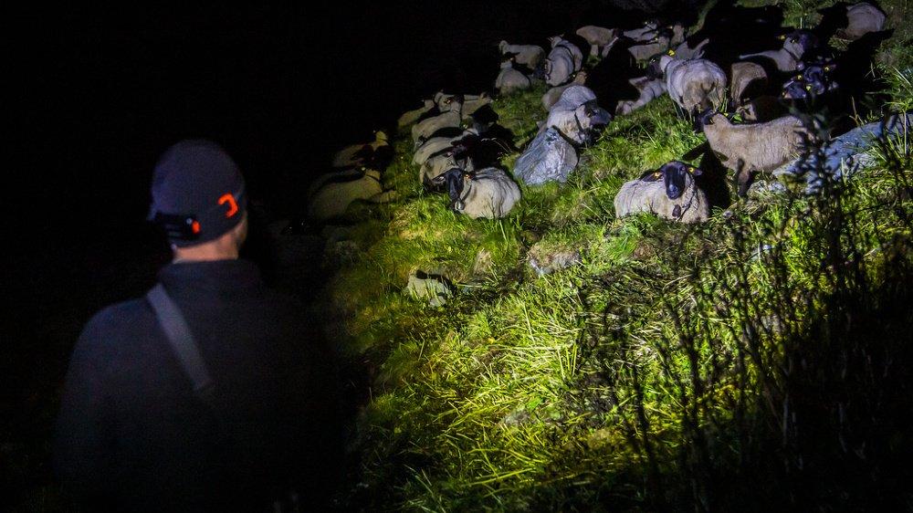Loïc Petten, le berger, assure la surveillance de jour avant de laisser place aux bénévoles d'OPPAL pour la nuit.