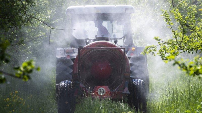 Pesticides: «Temps présent» visite le vignoble valaisan