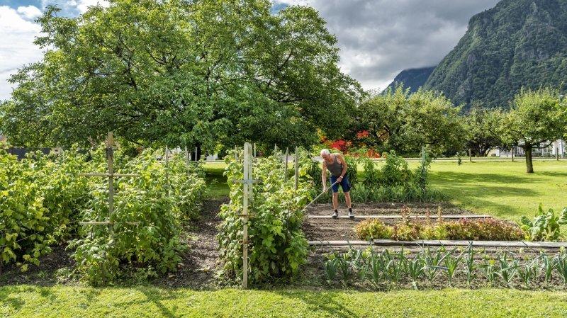 Le  jardin  de cocagne d'un passionné de fruits et légumes au Bouveret