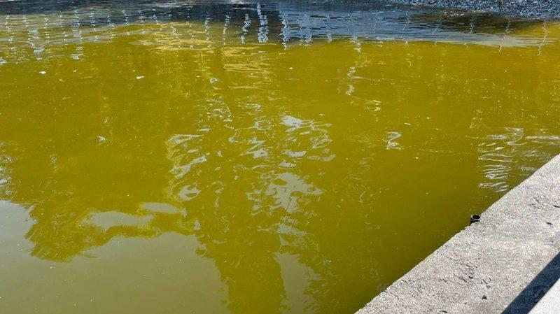 Les eaux du Léman ont viré au vert à hauteur de Saint-Gingolph.