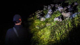 On a passé une nuit à l'alpage pour protéger les moutons du loup