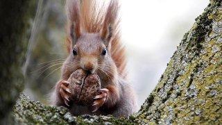 L'écureuil et la taupe ont plus d'un tour dans leur sac pour passer l'hiver sans crier famine