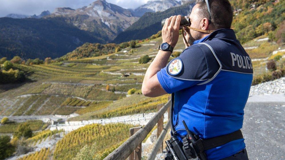 Patrouilles de police, caméras, rondes: comment éviter les vols de raisins en Valais?