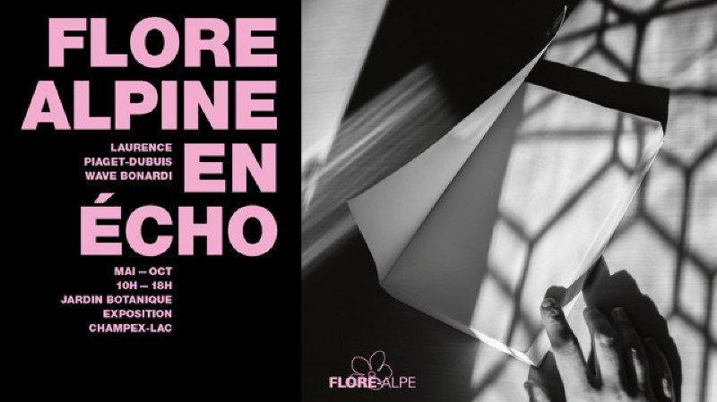 FLORE ALPINE EN ECHO