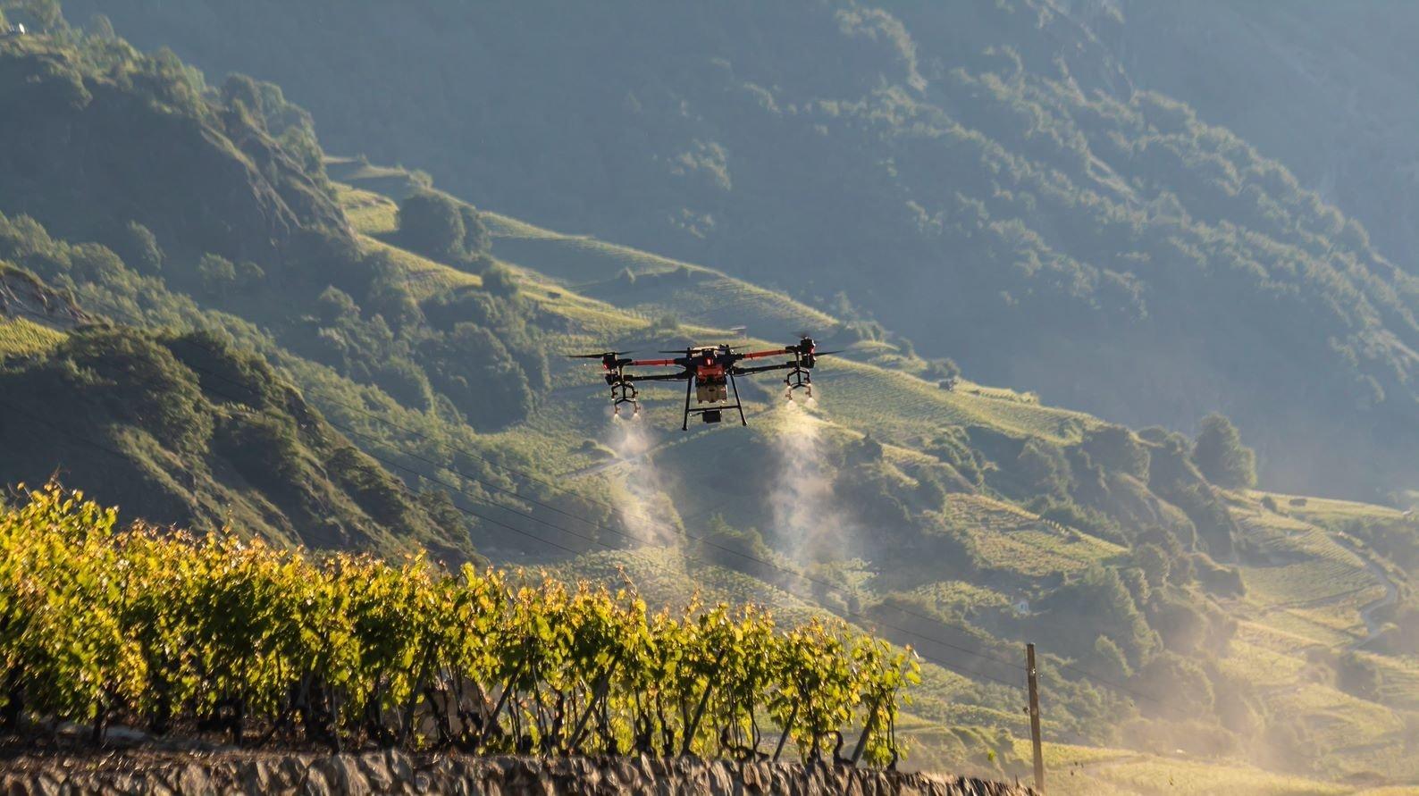 Sonnés par les pertes de raisins, les vignerons s'interrogent sur les traitements dans le vignoble valaisan