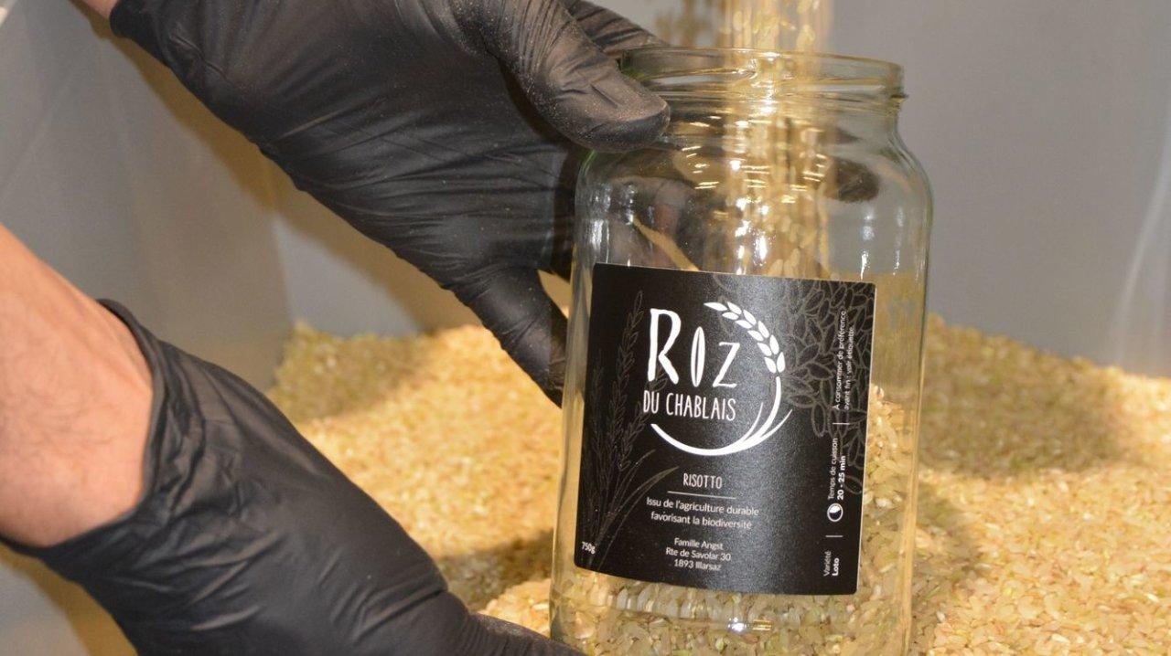 Il n'y aura pas de riz du Chablais en 2021