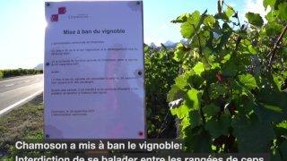 La récolte s'annonçant inégale, Chamoson accroît sa surveillance dans les vignobles