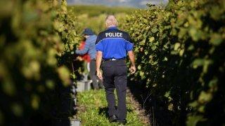 Déjà 1,5 tonne de raisins volés dans les vignes valaisannes