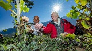 Saillon: Pascal Thurre vendange la vigne à Farinet et évoque ses souvenirs dans un livre
