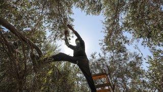 Sortie de girafon, cueillette d'olives et incendie d'une usine: la galerie photos du 11 octobre 2021