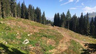 Plus de 600 petits arbres seront testés à Val de Bagnes