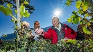La vigne à Farinet, les Lettres de Soie et le FC Sion, voici en images la semaine des photographes du Nouvelliste