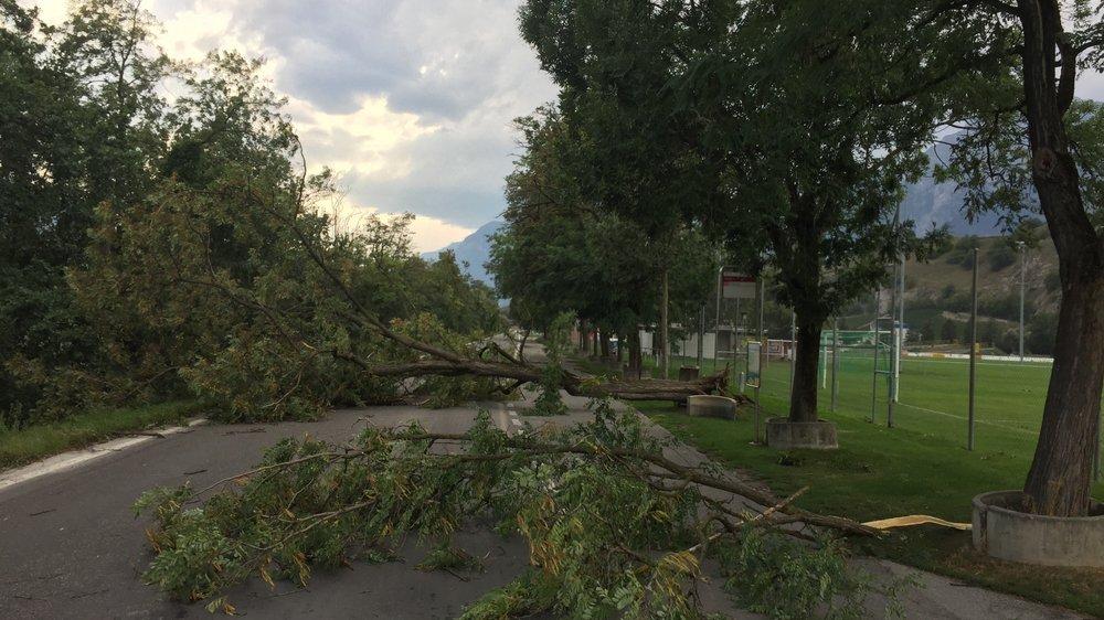 A Châteauneuf, un arbre a été déraciné et des branches arrachées lors du court mais violent orage survenu mardi en fin d'après-midi.