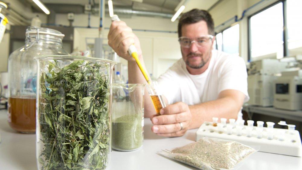 Processus de création d'un produit cosmétique à base de plantes alpines avec Julien Héritier, le responsable d'exploitation du site technologique PhytoArk à Conthey.