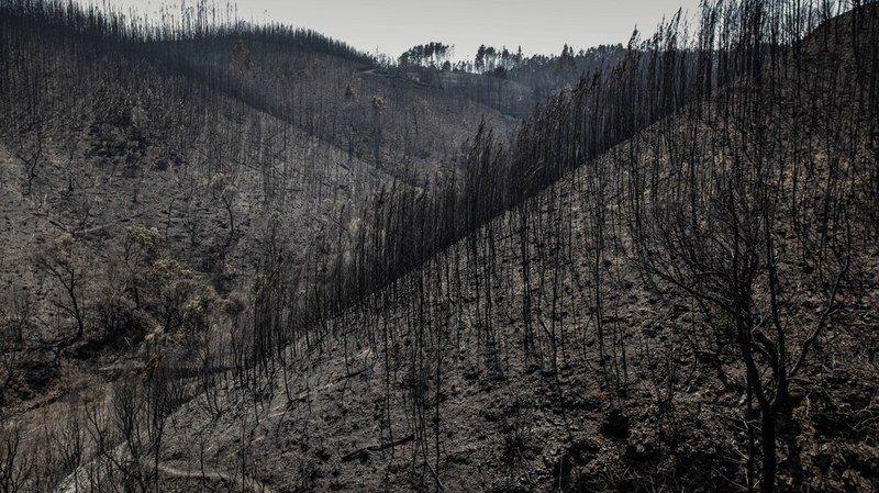 Portugal: les feux de forêt ont déjà ravagé plus de 60'000 hectares