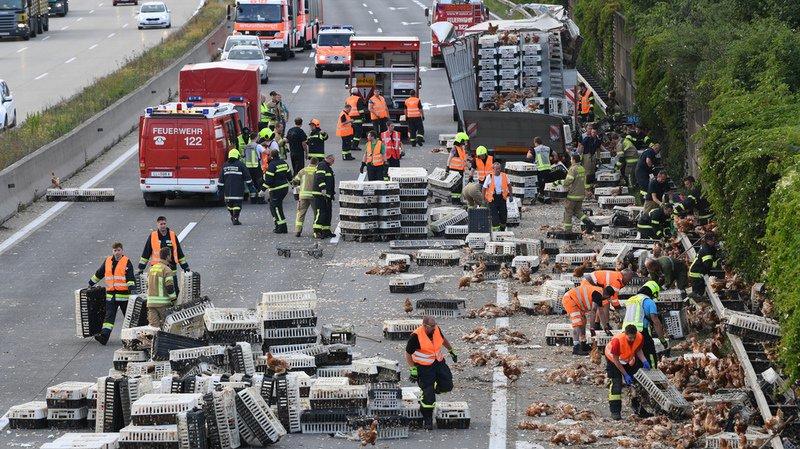 Accident: des milliers de poules bloquent une autoroute en Autriche