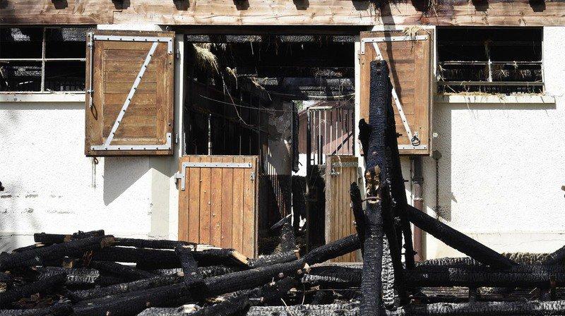 Incendie à l'IENA d'Avenches, le bilan s'alourdit: une vingtaine de chevaux et poneys ont finalement péri