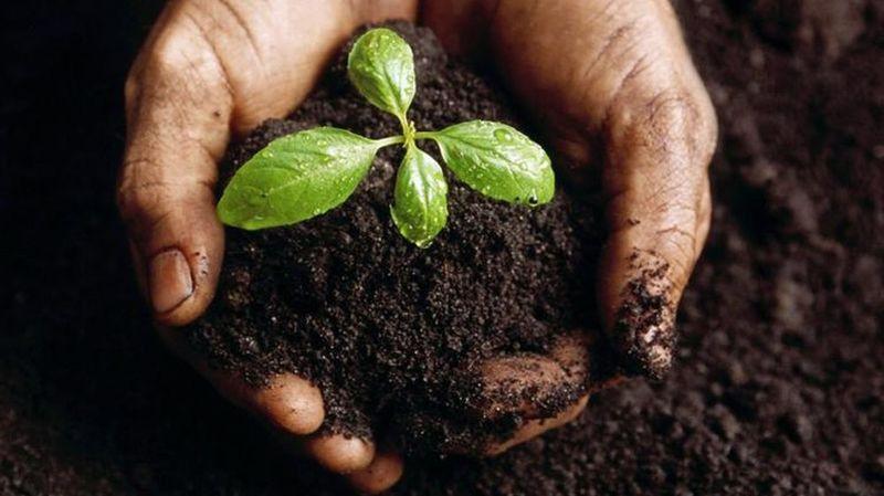 Un compost pour économiser les sacs bientôt taxés? les 4 règles pour réussir