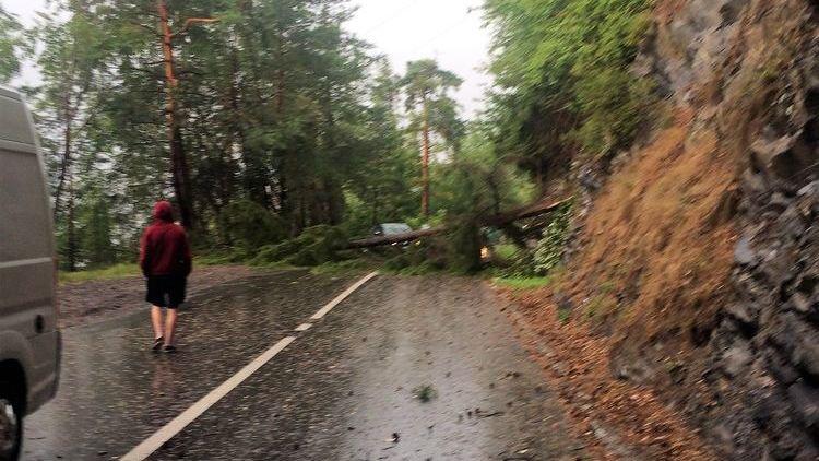 Route coupée par un arbre à La Tzoumaz