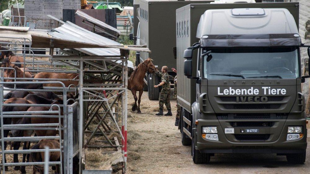Dans le canton de Thurgovie, l'intervention médiatique de défenseurs des animaux a abouti à la fermeture d'une exploitation où les chevaux étaient maltraités, avant d'être évacués et recueillis par des militaires.