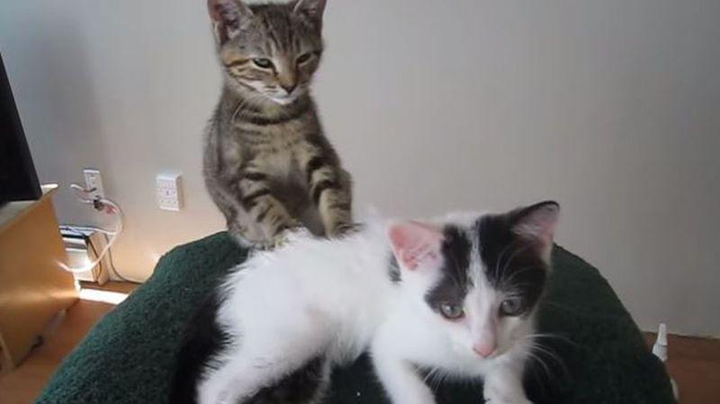 C'est la journée internationale du chat: notre sélection des vidéos félines les plus drôles
