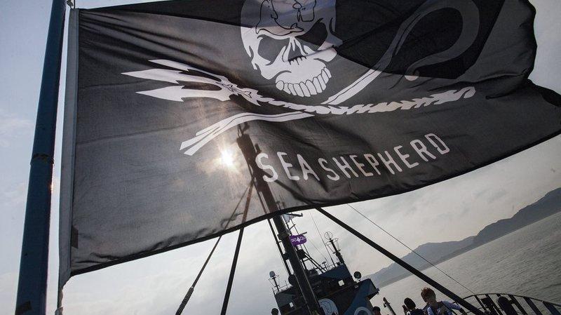 L'étendard de Sea Shepherd ne flottera pas cette année en Antarctique.