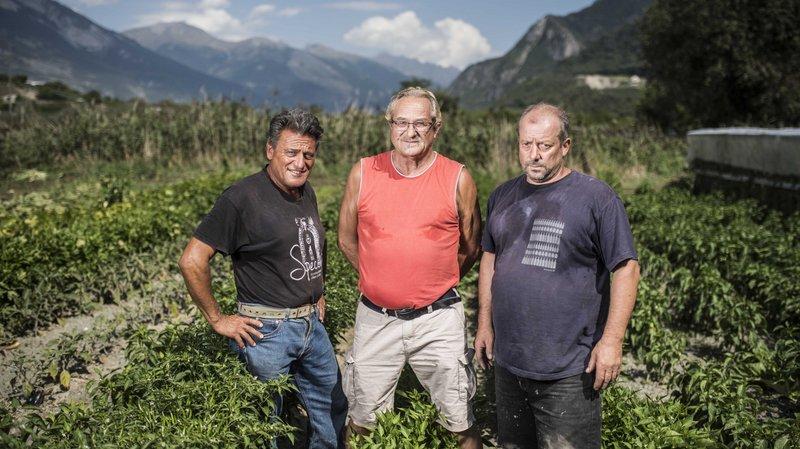 Sierre: trois jardiniers cultivent poivrons, tomates, salades et autres légumes sans le moindre apport d'eau