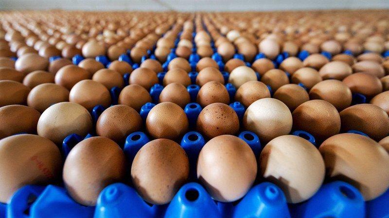 Consommation: après le scandale aux Pays-Bas et en Allemagne, Aldi Suisse retire tous ses oeufs d'importation de la vente