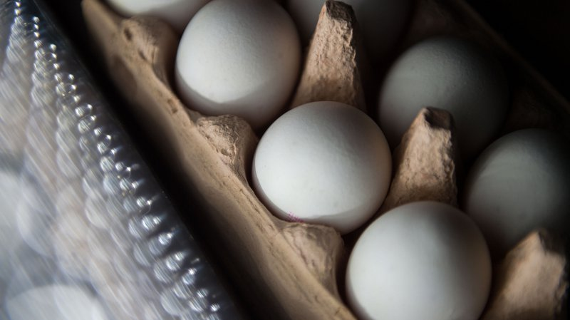 Oeufs contaminés: du fipronil détecté aux Pays-Bas dès novembre 2016