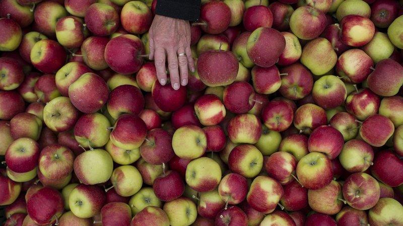 La pomme est le fruit préféré des Suisses, qui en consomment quelque 16 kilos en moyenne par année.