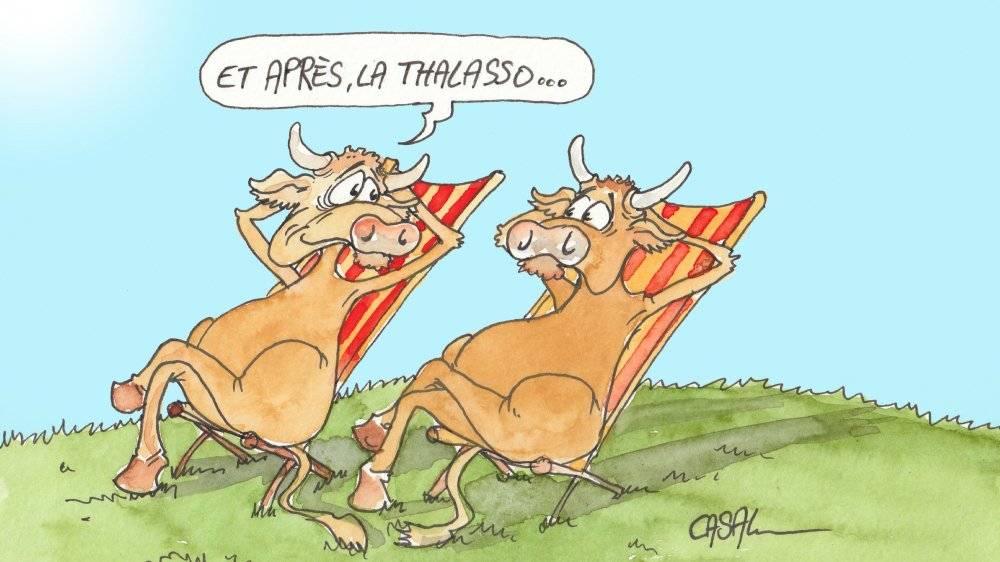 Des massages qui rendent les vaches heureuses.